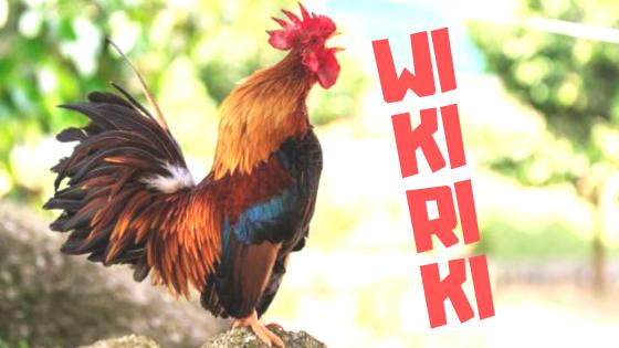 Wikiriki Residencias Wikitoki